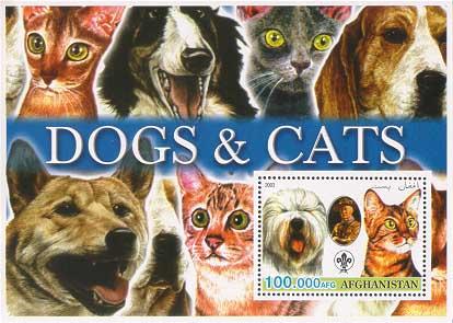 Afghanistan Catdog 100