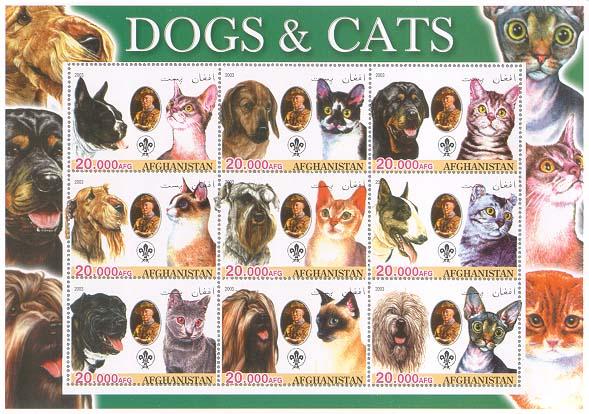 Afghanistan Dogcat