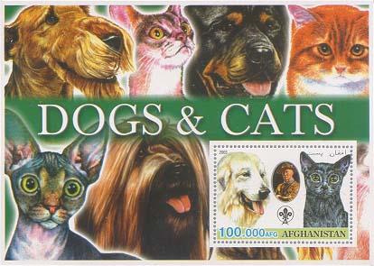 Afghanistan Dogcat 100