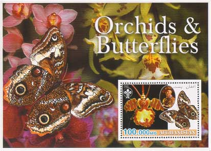 Afghanistan Orchid & Butterflies 100