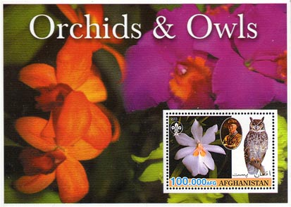 Afghanistan Orchid & Owls 100