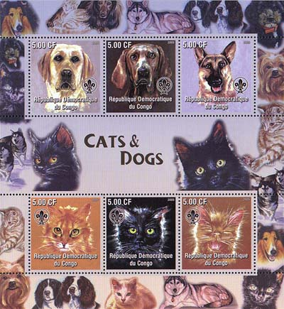 Congo Cats & Dogs