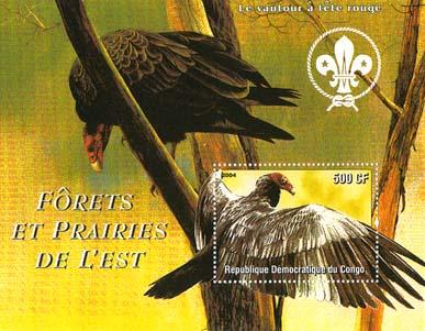 Congo Bird 2