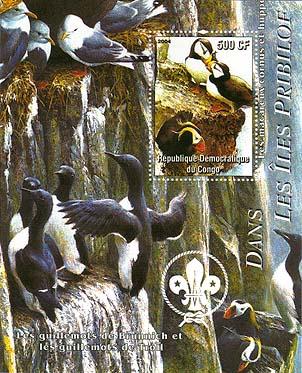 Congo Bird 3