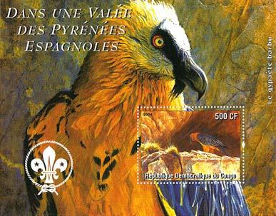 Congo Bird 4
