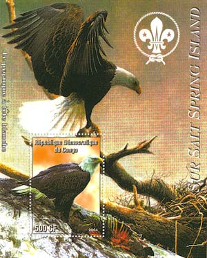 Congo Bird 7