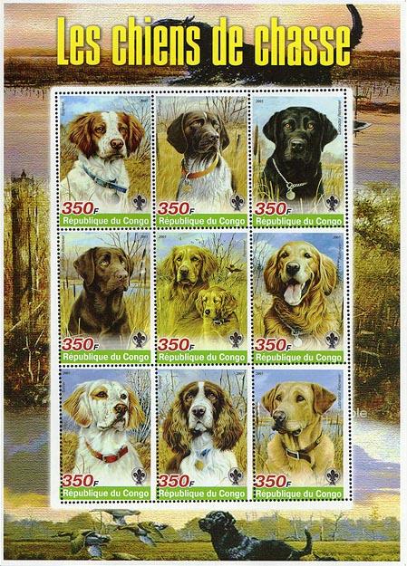 Congo Dogs