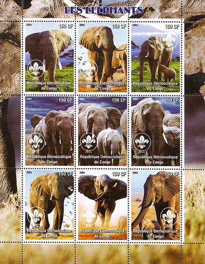 Congo Elephant 2004