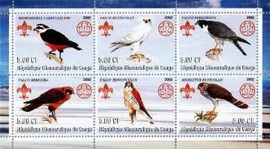 Congo Falcon