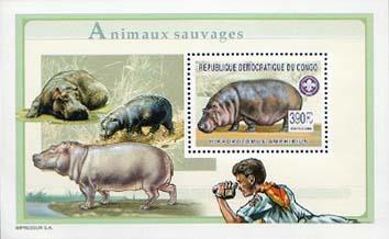 Congo Hippo