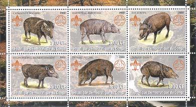 Congo Hog