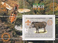 Congo Hog 25