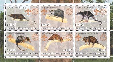 Congo Marsupial