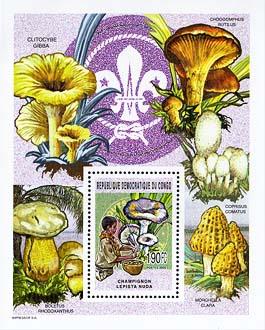 Congo Mushrooms