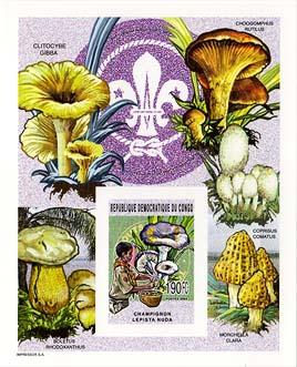 Congo Mushrooms Imperf