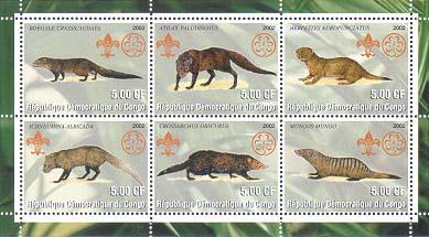 Congo Mongoose