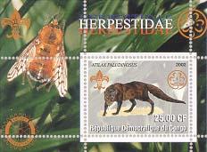 Congo Mongoose 25