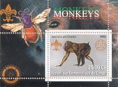 Congo Monkey 25
