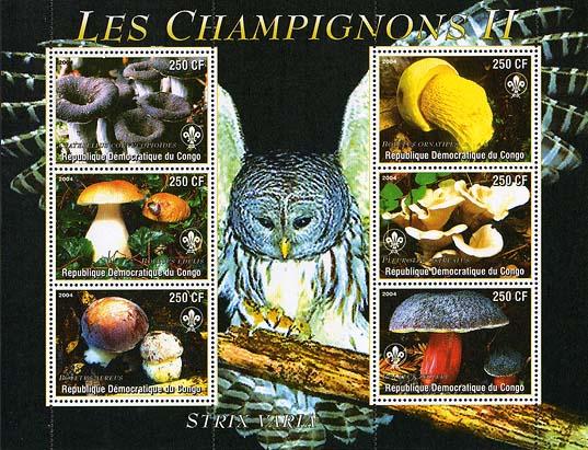 Congo Mushrooms & Owl