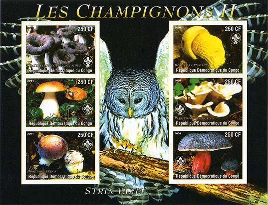 Congo Mushrooms & Owl Imperf