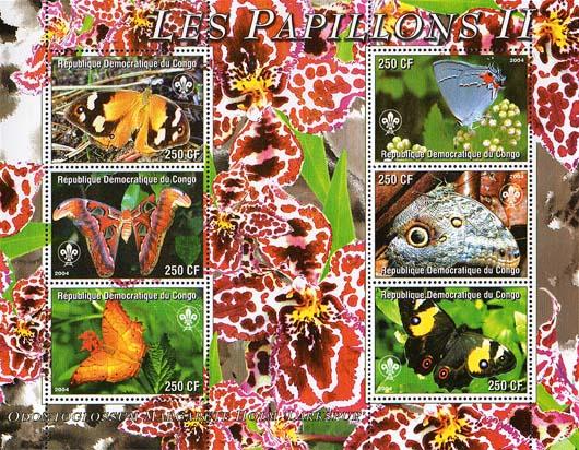 Congo Papillon 2