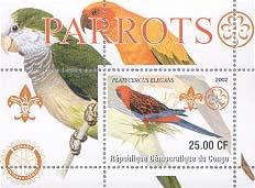 Congo Parrot 25