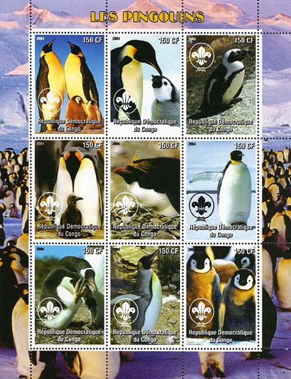 Congo Penguin 150