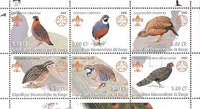 Congo Pheasant