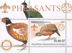 Congo Pheasant 25