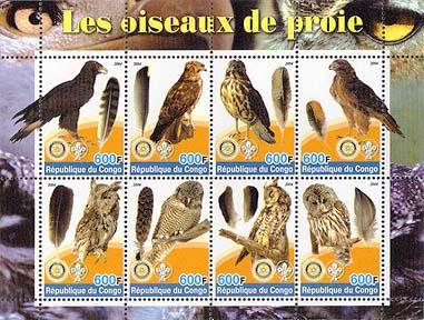 Congo Preybird