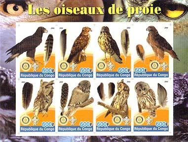 Congo Preybird Imperf